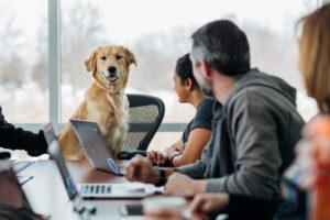 Hund im Beratungsgespräch bei Christoph Vogt Finanzberatung in Hamburg Geldanlage Vermögensverwaltung für finanzielle Unabhängigkeit